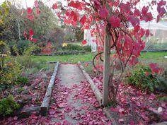 Beautiful Autumn leaves Autumn Leaves, Fields, Sidewalk, Beautiful, Fall Leaves, Side Walkway, Autumn Leaf Color, Walkway, Walkways