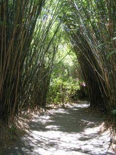 Bamboo Path, Charleston, SC