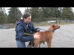 Hugabull.  A Vancouver BC based organisation that advocates for pit bulls and via a team of foster families throughout British Columbia help dogs fine new homes after pulling them from the shelter system.   HugABull.mov