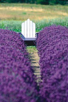 Purple Tree | Share