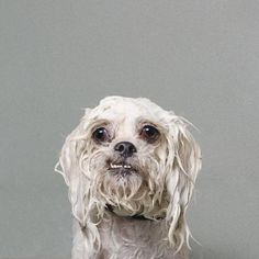 Feel your heart melt with this 'Wet Dog' photo series