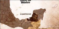 elarbolmiamigo-encinarosa: Palo de Campeche / Haematoxylum campechianun / Palo de Tinte