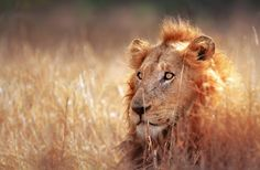 South Africa's Top 12 Experiences | Fodor's Travel