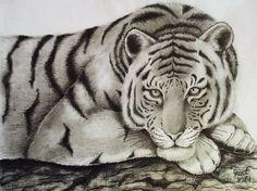 """Katarzyna G. drawings : """"Leżący tygrys"""""""