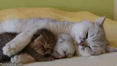Cat family - so cute.