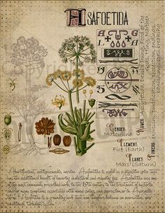 Magic plant knowledge has a long history and has a place in the modern witches Book of Shadows. Book of Shadows page. Magic Herbs, Plant Magic, Herbal Magic, Magick Spells, Witchcraft, Pagan, Grimoire Book, Witch Herbs, Spirituality