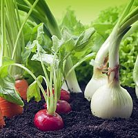 Grow These Plants Side-By-Side For A Thriving Garden - Companion Planting Helps Garden Vegetables Grow – Simplemost - When To Plant Vegetables, Growing Vegetables, Edible Plants, Edible Garden, Gardening For Beginners, Gardening Tips, Small Herb Gardens, Diy Garden Projects, Garden Ideas