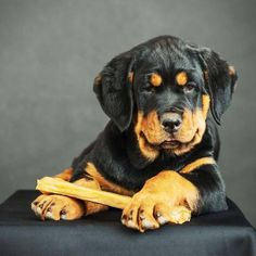 Zeus, Spartan, Dutchess or Ariel might make some good Rottweiler names for boys or girls. Find more unique choices here... http://www.dog-names-and-more.com/Rottweiler-Names.html