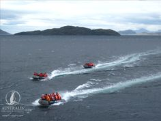 Are you ready for adventure? If so, click this pin to learn more about our cruise ship and excursions through Cap Horn, Les Fjords, Whale Watching Tours, Le Cap, Argentine, Ushuaia, Humpback Whale, Whales, Habitats