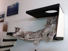 CatastrophicCreationsCatwalks2 the cat on the right bears an uncanny resemblance to my miyu, double paws and all.