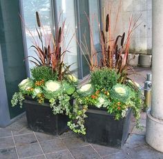 Millet and coral-twig dogwood combine with cabbage and kale for a long-lasting fall planter. via Urban Garden