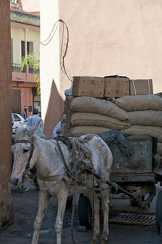 donkey pulling a big weight, Marrakech, Morocco