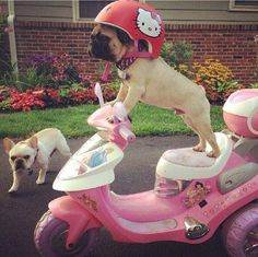 My faves! Pug and hello kitty