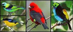 Prachtige vogels met paradijselijke kleuren
