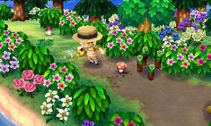 Town inspiration: spring hibiscus pathway
