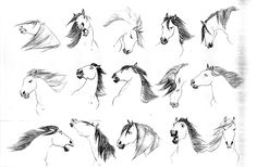 114 Best drawing horses 101: anatomy images in 2015