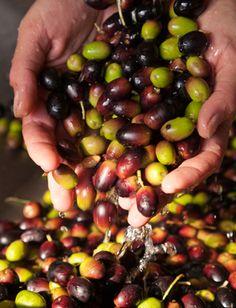 Olio extravergine di oliva Il Brolo Eccellenza unica del Garda bresciano