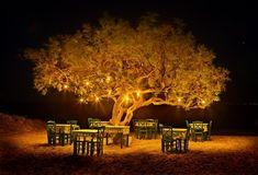 A Greek tavern under the tree in plaka beach Naxos island, Greece. Midnight Summer Dream, Places Around The World, Around The Worlds, Naxos Greece, Mykonos Greece, Corfu, Golden Tree, Greek Isles, Ideas