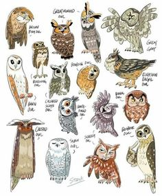 I have recently developed an owl fascination. As an art student/crafty person in general I do. Owl Art, Bird Art, Animal Drawings, Art Drawings, Owl Pictures, Beautiful Owl, Owl Crafts, Art Sketches, Illustration Art