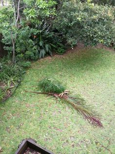 After tc Marcia