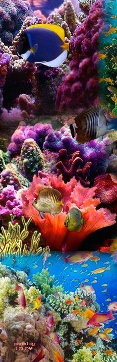 Great Barrier Reef|