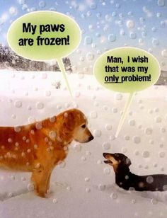 You Gonna Go There . Dachshund Through the Snow 😐 Dachshund Funny, Dachshund Love, Funny Dogs, Daschund, Funny Animal Pictures, Funny Animals, Cute Animals, Dog Love, Puppy Love
