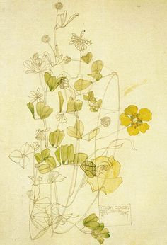 Plant Study ▫ Yellow Clover / Holy Island by Charles Rennie Mackintosh ▫ 1901