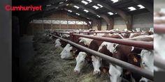 Bakan Tüfenkçi, et ithalatı yapan firmaların isimlerinin 'sır' olduğunu açıkladı: Bakan, et ithalatı yapan şirketlerin 'sır' olduğunu söyledi. Ancak 8 yerli, 3 yabancı firma görevlendirildi, hatta biri de Ürdün merkezli.