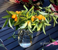 RAMBLINGS FROM A DESERT GARDEN....: 5 Surprising Ways to Use Citrus Fruit For Home and Kitchen