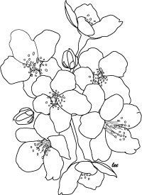Cherry blossoms coloring page or floral digital stamp by Lee Hansen, all rights reserved