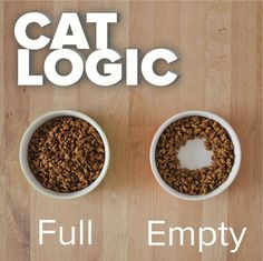 Cat Staring At Food Empty Bowl