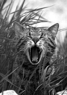 De brul.  Via Cats W & B