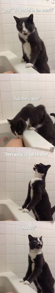 """""""oh dear stuuupid human... Have you not heard of the ultimately superior Cat cleansing technique? This water thing is disgusting!"""""""