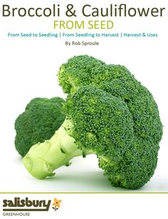 Growing #Broccoli and #Cauliflower from Seed - Seed to Seedling - Seedling to Harvest - Harvest and Uses - By Rob Sproule, Salisbury Greenhouse