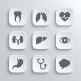 medical-icons-set-vector-white-app-buttons-heart-stethoscope-pulse-tooth-brain-stomach-lungs-liver-kidney-eye-46012903.jpg (160×160)