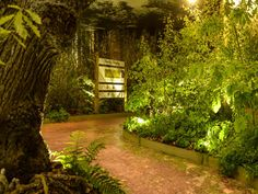 beauty sleeping woodland trust - Google Search