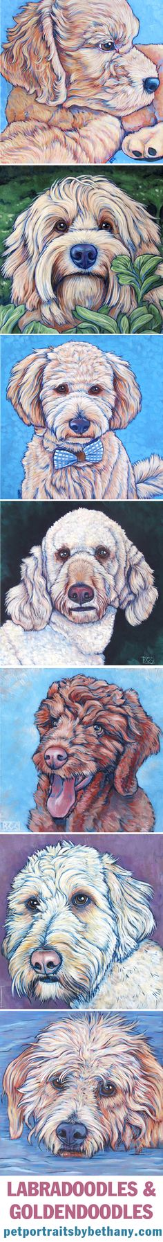 GoldenDoodle and Labradoodle Dogs by Bethany