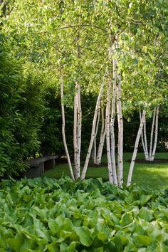Three Rivers Deep Gardens Beautiful and Book series