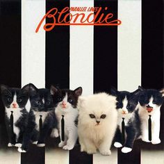 28 Kittens On Album Covers - The Big Picture - NME.COM - The world's fastest music news service, music videos, interviews, photos and more
