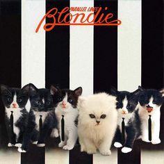 Filhotes de gato ilustram capas de clássicos do rock, no site da NME -