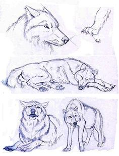 Wolf sketches which i will be using for reference only animal sketches, animal drawings, Pencil Drawings Of Animals, 3d Drawings, Animal Sketches, Drawing Sketches, Wolf Drawings, Drawing Animals, Drawing Ideas, Sketching, Drawing Tips