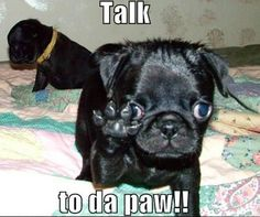 "#FridayFunny - ""Pete, talk to da paw!!"" #PetPoolWarehouse"