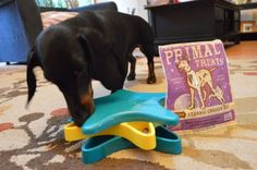 Outward Hound Puzzle Toy & Primal Treats review: Rain Day Tips and Tricks! More in my review with the hounds!