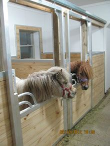 Miniature Horse Stalls. These will be in my barn for my minis!