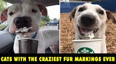 [Daily Fun Pics] 10+ Hilarious Photos Of Dogs - Permanent Dogs