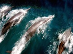 Nice to hear you! Dolphins recognise old friends even after 20 years apart - Americas - World - The Independent