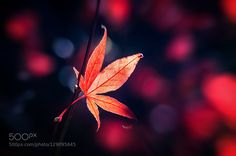 Fall by pslee. Please Like http://fb.me/go4photos and Follow @go4fotos Thank You. :-)