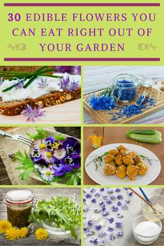 A surprising number of common garden flowers are edible. Here& 30 edible flowers and weeds that may just be hiding in your garden. List Of Edible Flowers, Eatable Flowers, Best Edibles, Wild Edibles, Edible Plants, Edible Garden, Common Garden Plants, Squash Flowers, Dandelion Jelly