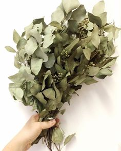 This first day back from vacation has me on the struggle bus for real. But coming home to my fully dried eucalyptus is a real treat. I'll take what I can get.