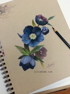Black hellebore study i did in colored pencil and marker on strathmore tan toned paper. ive been drawing a lot of flowers lately.